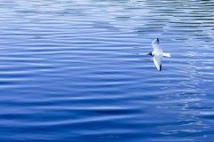 La mouette vole au-dessus de la surface bleue de l'eau L'eau remplit complètement écran Oiseau au-dessus de la mer photo libre de droits