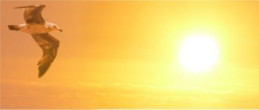 La mouette vole vers le coucher de soleil Photo libre de droits