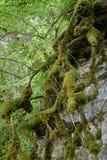 La mousse a couvert des fonds d'arbre images stock