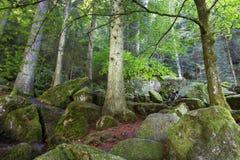 La mousse a couvert des rochers et des arbres Photos libres de droits