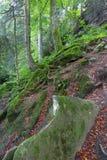 La mousse a couvert des rochers et des arbres Photo stock