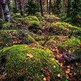 La mousse a couvert des roches dans la forêt d'automne photographie stock libre de droits