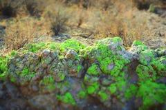 La mousse a couvert des roches dans le désert de Sonoran Image libre de droits