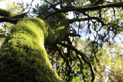La mousse a couvert l'arbre dans la forêt tropicale Photo libre de droits
