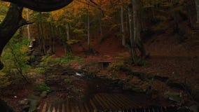 La mousse a couvert l'arbre Rivière et cascade de montagne dans Autumn Forest clips vidéos