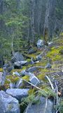 La mousse a couvert le flanc de coteau, parc national de Banff, Canada Photos stock