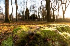 La mousse a couvert le tronçon d'arbre Images libres de droits