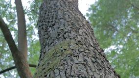 La mousse a couvert le tronc d'arbre dans la forêt au soleil banque de vidéos
