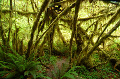 La mousse a couvert les arbres no.2 Photos stock