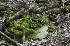 La mousse a couvert la pierre de branches tombées Images stock