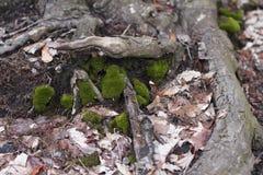 La mousse et sèchent des feuilles près d'un arbre photographie stock libre de droits