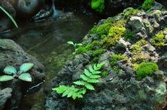 La mousse grandissent sur la cascade de pierre tout près Image libre de droits