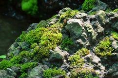 La mousse grandissent sur la cascade de pierre tout près Photographie stock libre de droits