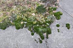 La mousse pelucheuse verte douce avec les flocons de neige blancs couvre des dalles en béton Photo libre de droits