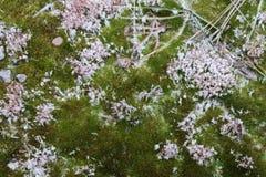 La mousse pelucheuse verte douce avec les flocons de neige blancs couvre des dalles en béton Images libres de droits