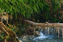La mousse pend d'une branche d'arbre qui s'étend à un remblai sur la crique de Havasu photo stock