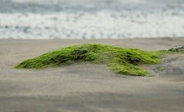 La mousse près de la mer photos libres de droits