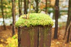 La mousse se développe sur le poteau en bois image libre de droits