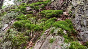 La mousse sur les pentes de forêt Image stock