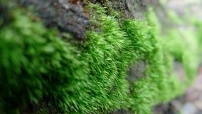 La mousse verte photo libre de droits