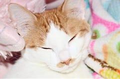 La moustache de Kitty Photographie stock