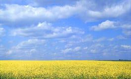 La moutarde dans la floraison Photo libre de droits