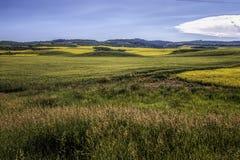La moutarde met en place l'Idaho du sud 1 image stock