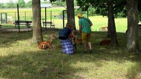 La mère de père de famille et la fille d'enfant en bas âge posant près des animaux d'oeufs de poisson dans le zoo se garent banque de vidéos