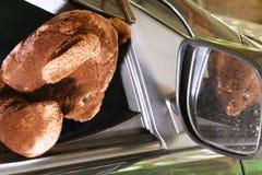 La muñeca del oso en la acción de la cabeza fuera de la ventana de la puerta de coche Imagenes de archivo