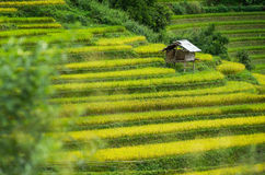 La MU Cang Chai Photo libre de droits