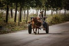 La mucca domestica sta tirando un carretto per trasporto in Tam Coc, Vi immagine stock