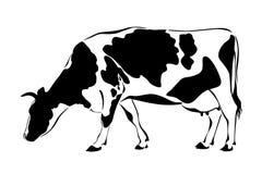 La mucca mangia l'erba Fotografia Stock