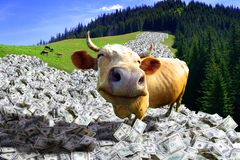 la mucca è nei soldi Immagini Stock Libere da Diritti