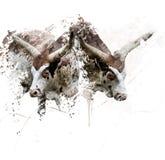 La mucca texana dirige l'acquerello Fotografia Stock