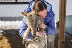 La muchacha abraza el lobo gris en la jaula al aire libre con los lobos y los perros foto de archivo