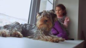 La muchacha adolescente jugando en línea al juego para el smartphone y el perro casero duerme web que se sienta en alféizar del t Foto de archivo libre de regalías