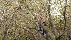 La muchacha adolescente subió un árbol metrajes