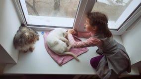 La muchacha adolescente y los animales domésticos gato y el animal doméstico del perro una mirada hacia fuera de la ventana, gato Imagen de archivo libre de regalías