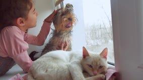 La muchacha adolescente y los animales domésticos gato y perro que miran hacia fuera el animal doméstico la ventana, el gato duer Fotos de archivo libres de regalías