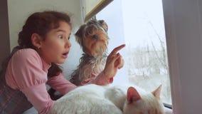 La muchacha adolescente y los animales domésticos gato y perro que miran hacia fuera el animal doméstico la ventana, el gato duer Fotos de archivo