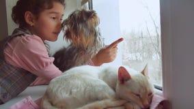 La muchacha adolescente y los animales domésticos gato y perro que miran hacia fuera la ventana, el animal doméstico del gato due Imágenes de archivo libres de regalías