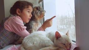 La muchacha adolescente y los animales domésticos gato y perro que miran hacia fuera la ventana, el animal doméstico del gato due Fotos de archivo