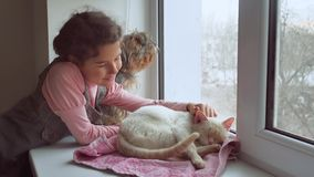 La muchacha adolescente y los animales domésticos gato y perro que miran hacia fuera la ventana, gato duerme animal doméstico Fotos de archivo