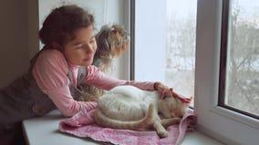 La muchacha adolescente y los animales domésticos gato y perro que miran hacia fuera la ventana, gato duerme animal doméstico Fotografía de archivo libre de regalías