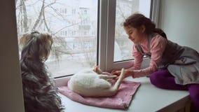 La muchacha adolescente y los animales domésticos gato y perro un animal doméstico de mirada hacia fuera la ventana, gato duerme Imagenes de archivo