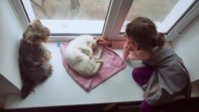 La muchacha adolescente y los animales domésticos gato y perro un animal doméstico que mira hacia fuera la ventana, gato duerme Fotografía de archivo libre de regalías