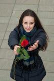 La muchacha agradable quiere felicitar con la rosa del rojo fotos de archivo