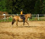 La muchacha alegre joven monta en un caballo marrón Entrenamiento del montar a caballo la niña está montando un caballo Fotos de archivo libres de regalías