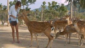 La muchacha alimenta ciervos en parque nacional contra las plantas