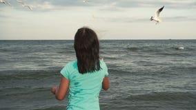 La muchacha alimenta gaviotas en la costa almacen de metraje de vídeo